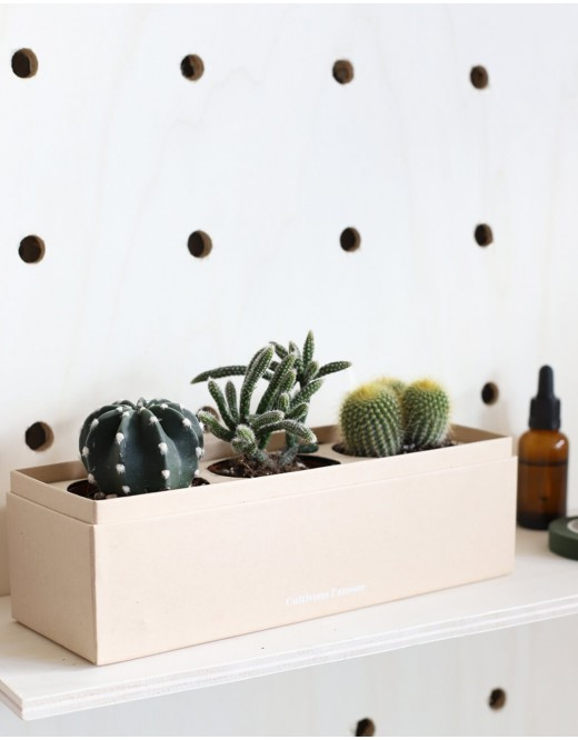 Coffret Rectangle : Trio de Cactus