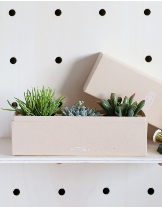 Coffret Rectangle : Trio de Succulentes